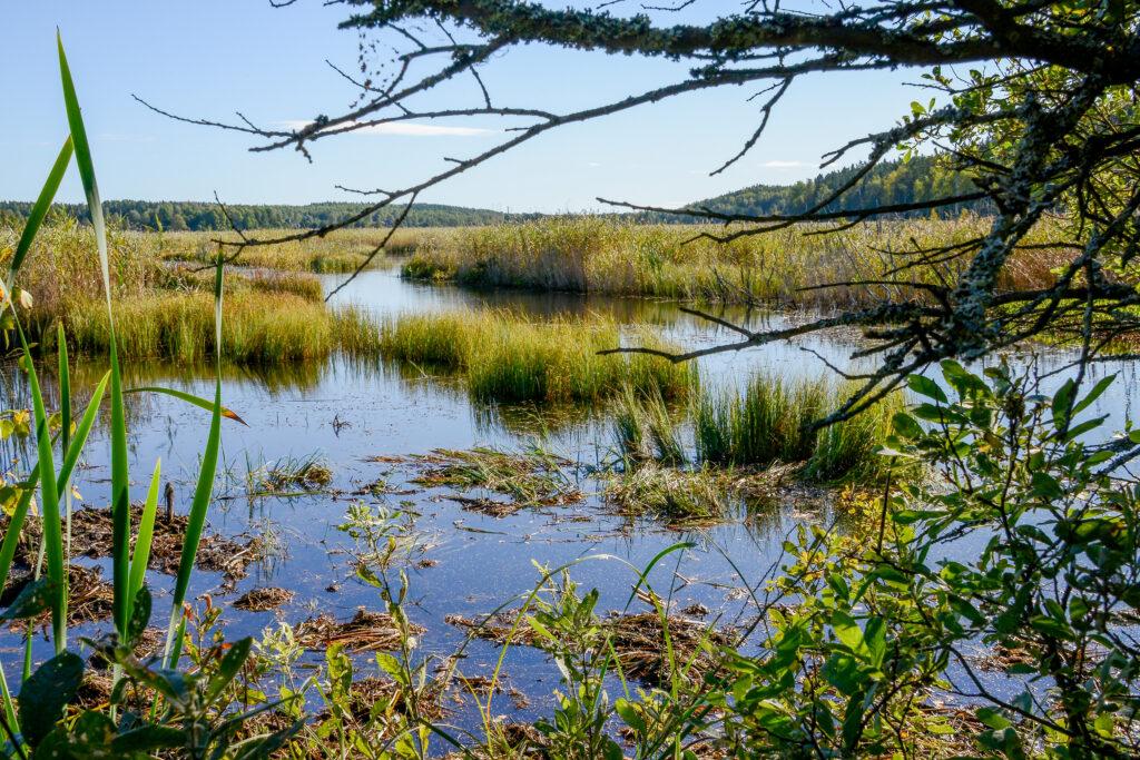 Foto av en våtmark.